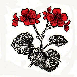 geraniumred