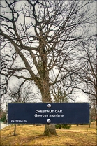 Project: Tree labeling. For a tree location map, go to our Home page, Projects, Tree Labeling. Photo: JAS